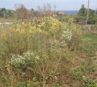 Wildflower Planting in Late Fall